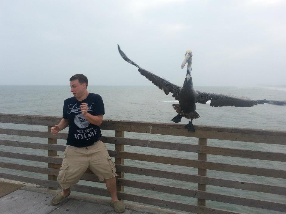 Pelikan und Mann