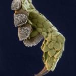 Geckofuss