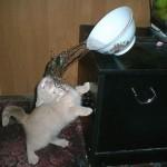 Katzendusche