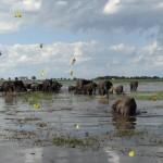Schmetterlinge und Elefanten