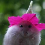Maus mit Blume auf Kopf