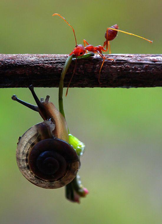Ameise und Schnecke