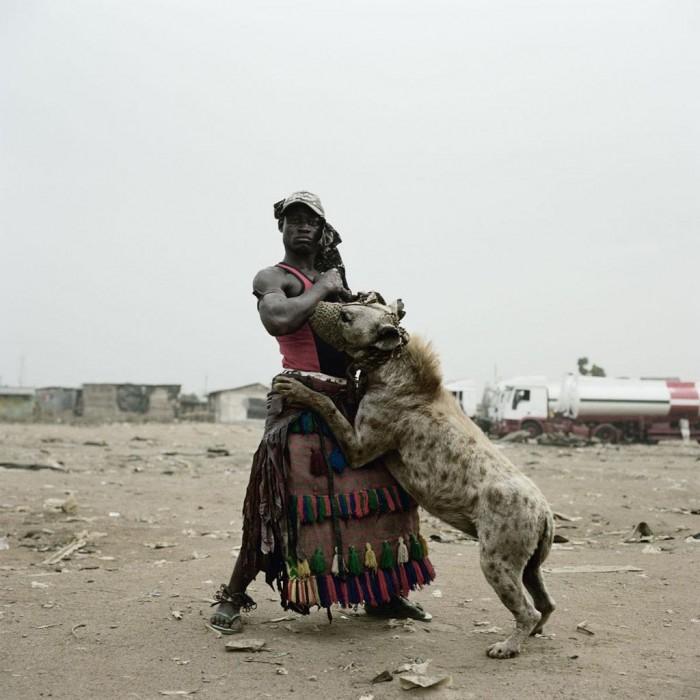 Zahme Hyäne