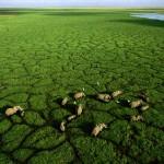 Elefanten beim Grasen