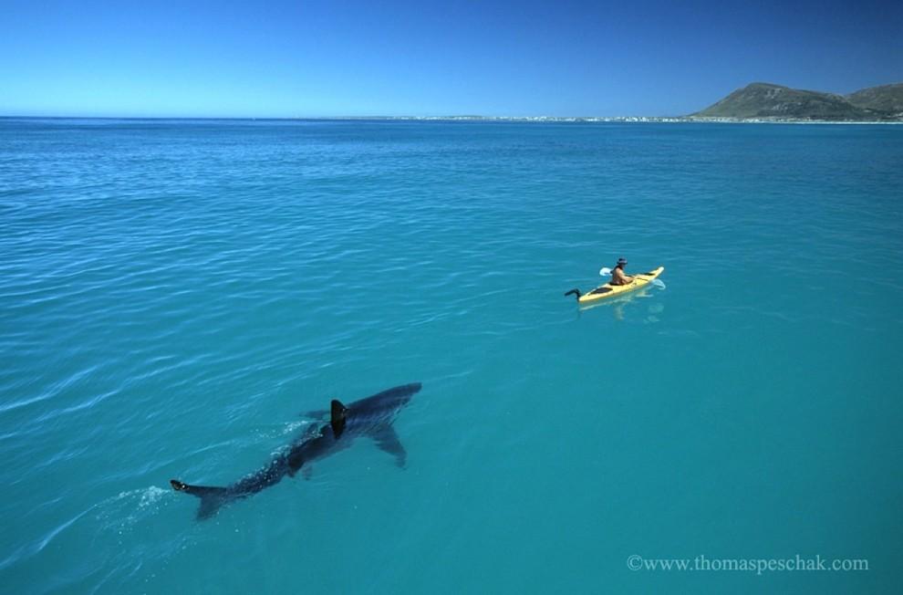 Hai und Kajak