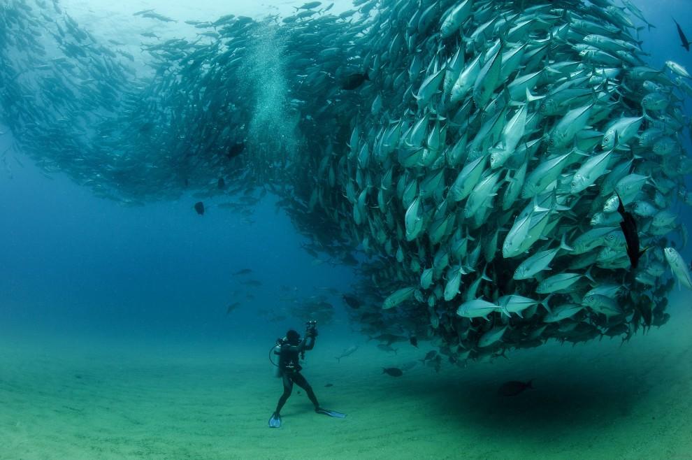 Taucher mit Fischwolke