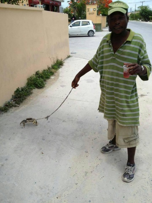 Spaziergang mit Krabbe