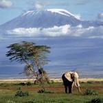 Elelfant vor dem Kilimandscharo