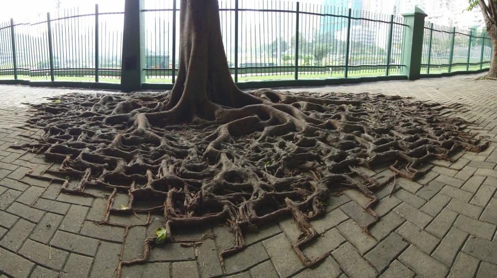 Baum mit eckigen Wurzeln