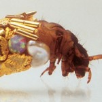 caddisfly-gold-shell-art-Hubert-Duprat-2