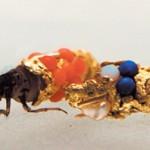 caddisfly-gold-shell-art-Hubert-Duprat-3