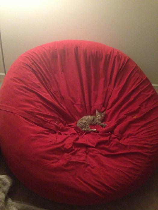 Kleine Katze - Großes Bett