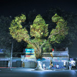 3d-tree-projections-clement-briend-3
