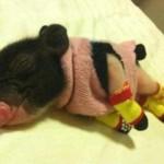 Ferkel im Schlafanzug