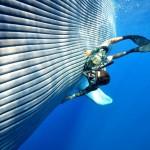 Blauwal streicheln