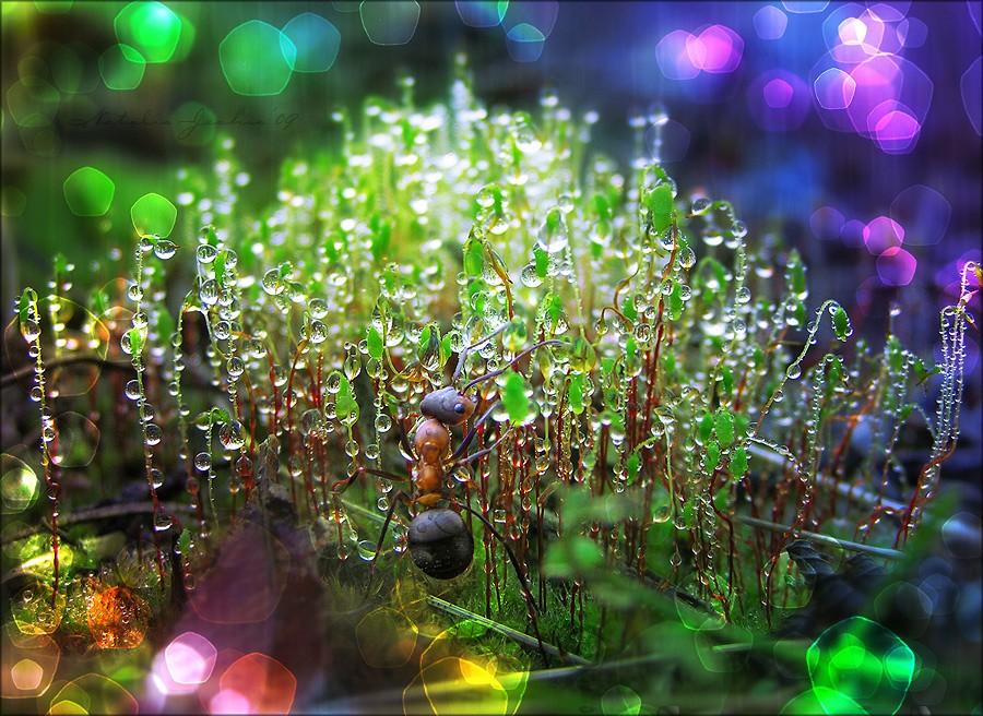 Ameise im Wunderland