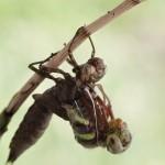 birth_dragonfly_05