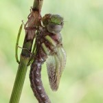 birth_dragonfly_07