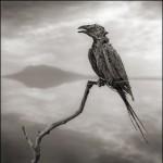 o-CALCIFIED-SONGBIRD-900