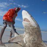 Bronze_Whaler_Shark